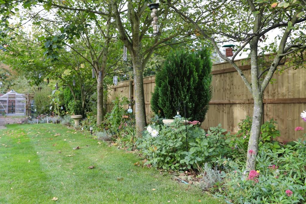 My Garden September 2020 by phil_sandford