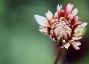 29th Sep 2020 - Still Flowering