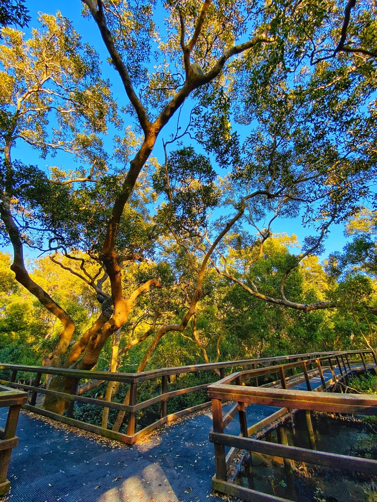 Morning in the mangroves by corymbia