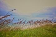 30th Sep 2020 - Windy Beach