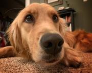 29th Sep 2020 - Puppy dog eyes