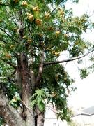 30th Sep 2020 - Norwich Tree