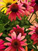 6th Sep 2020 - Happy Birthday Flowers