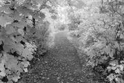 1st Oct 2020 - Pathway Through Voyageurs