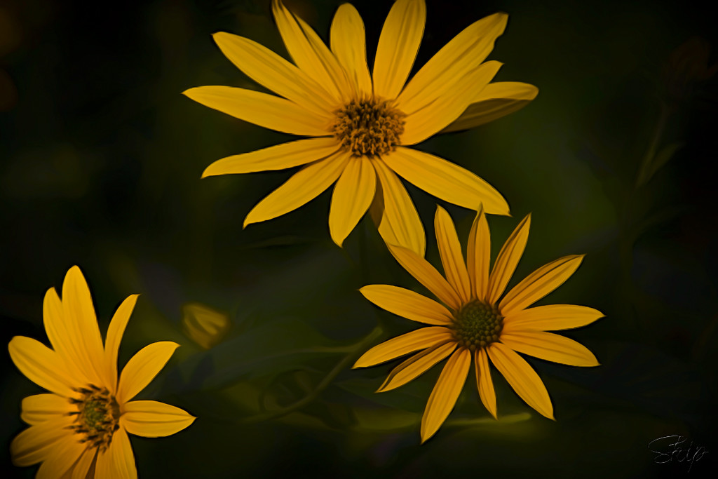 Common Sunflowers by skipt07