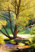 19th Sep 2020 - Backlit Tree
