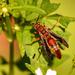 Wasp!