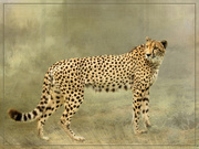 1st Oct 2020 - At Cheetah outreach