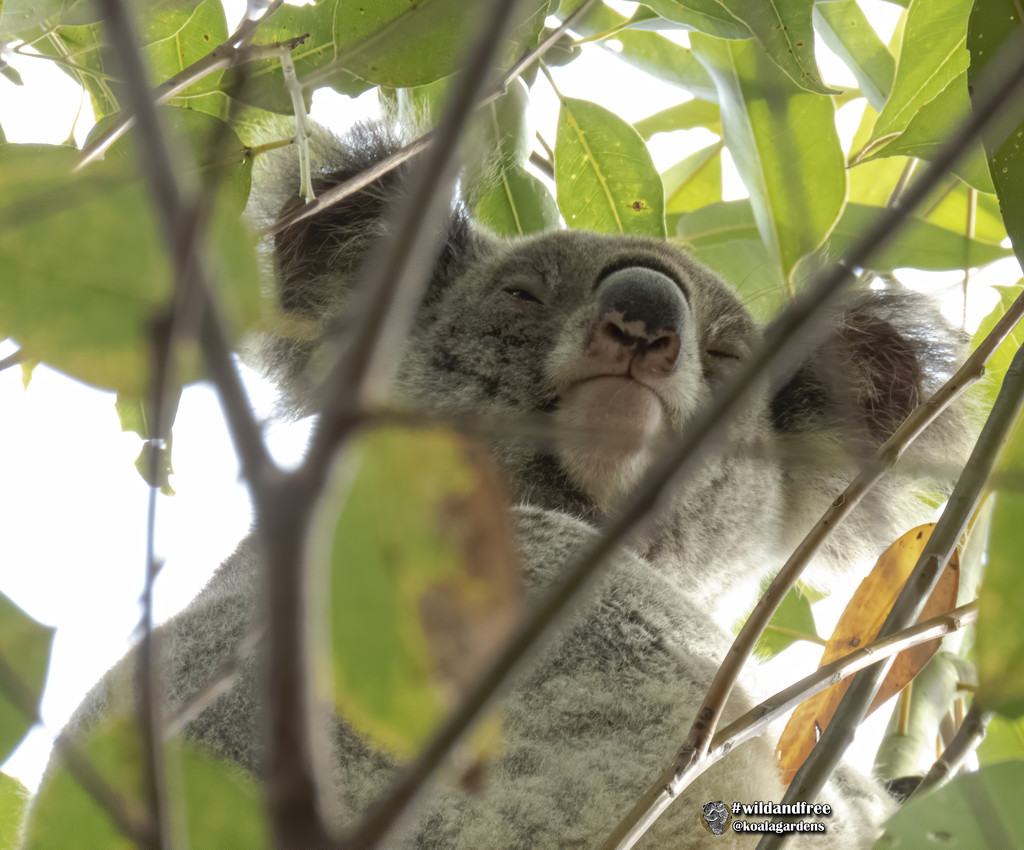 now that is a nose pattern! by koalagardens