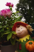 1st Oct 2020 - our gardener is doing his best...