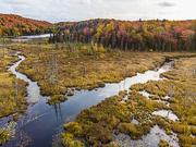 1st Oct 2020 - Quebec Wetlands