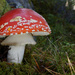 Fly agaric flashed