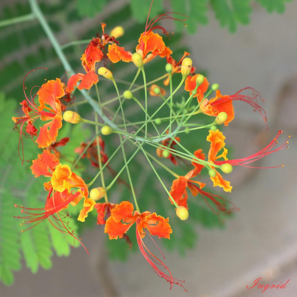 Peacock Flower Wreath by ingrid01