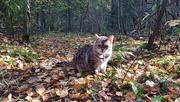 1st Oct 2020 - Autumn leaves