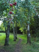 1st Oct 2020 - A path through the trees