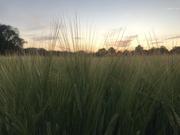 12th Jul 2020 - Sunset
