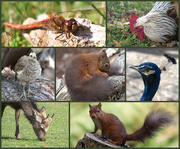 1st Oct 2020 - On My Walk at Brownsea Today................