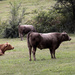 Cattle enjoying a cool day