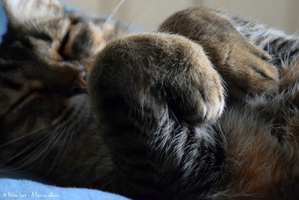 paws! by parisouailleurs