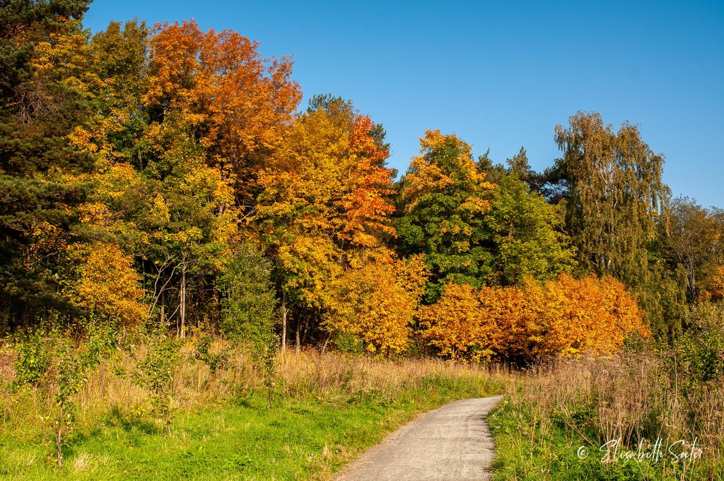 More autumn at the Lade Trail by elisasaeter