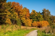 1st Oct 2020 - More autumn at the Lade Trail