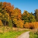 More autumn at the Lade Trail