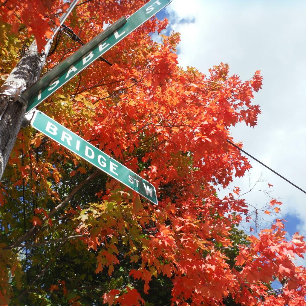 Autumn Colours by spanishliz
