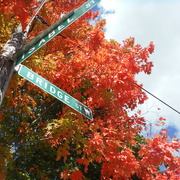 1st Oct 2020 - Autumn Colours