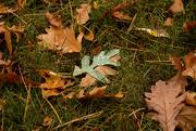 29th Sep 2020 - One Green Leaf