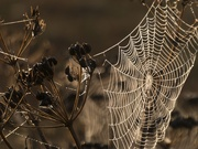 1st Oct 2020 - the web completed
