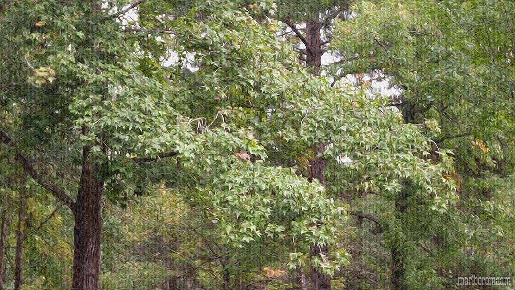 Trees... by marlboromaam