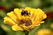 29th Sep 2020 - Bee At Work