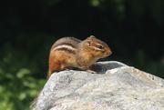 27th Sep 2020 - Backyard Visitor