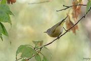 1st Oct 2020 - Backyard birding