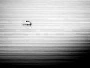 1st Oct 2020 - let sleeping swans lie