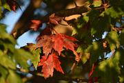 1st Oct 2020 - Autumn glow