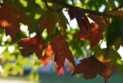 1st Oct 2020 - Autumn Golden Hour