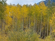 1st Oct 2020 - Tall Fall Colors