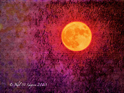 1st Oct 2020 - Harvest Moon 2020