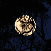 25th Aug 2020 - Moonstruck