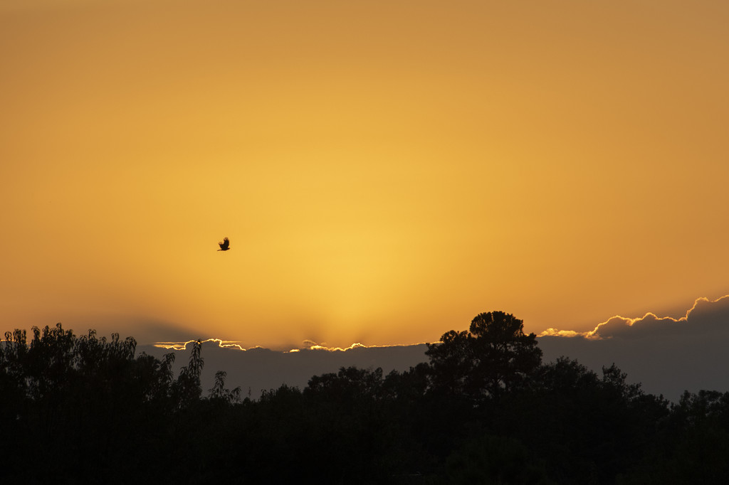 Flying Into The Sunset by timerskine