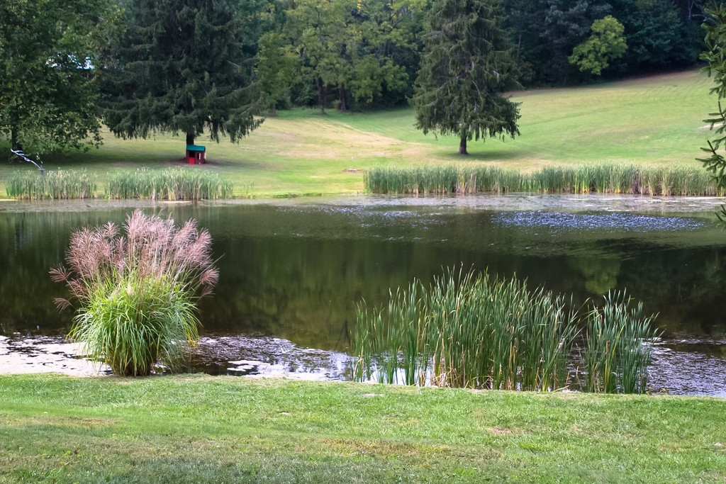 Peaceful pond by mittens