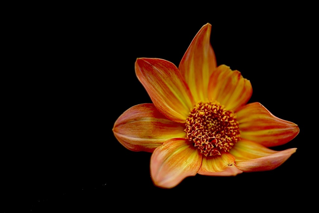 Imperfect Beauty  by carole_sandford