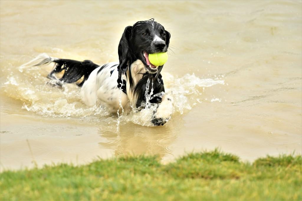 Look Mum I've got the ball by rosiekind