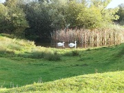 2nd Oct 2020 - On the pond