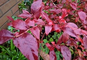 2nd Oct 2020 - In its Autumn finery