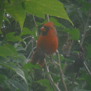 2nd Oct 2020 - Visitor Outside My Window