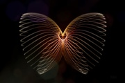 2nd Oct 2020 - 2020-10-02 spread your wings