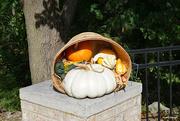 2nd Oct 2020 - Fall basket