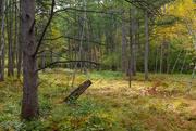 2nd Oct 2020 - Tamarack in the Bog.